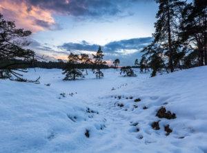 Veluwe sneeuw timelapse