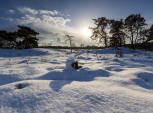 Timelapse sneeuw Veluwe