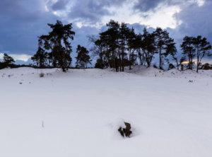 Sneeuw timelapse veluwe