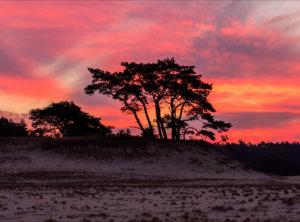 Timelapse vuurrode zonsopkomst Veluwe
