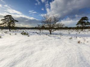 Timelapse veluwe sneeuw