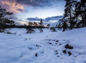 Zonsondergang sneeuw Veluwe