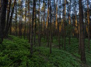 Timelapse bos veluwe