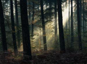 Timelapse lichstralen bos