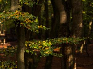 Timelapse herfstbladeren speulderbos