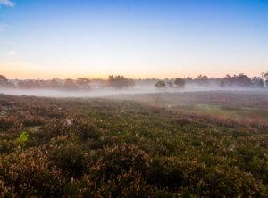 Zonsopkomst heide en mist