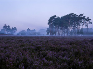 Timelapse blue hour mist