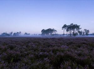 Timelapse mist heide blue hour