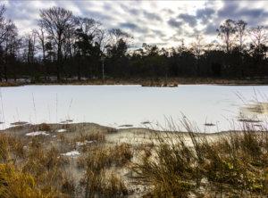 Timelapse smeltende sneeuw Veluwe