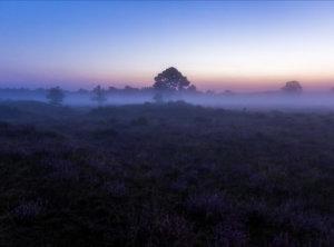 Timelapse heide en mist