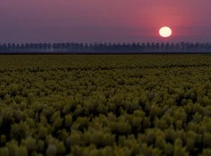 Tulpen timelapse zonsopkomst
